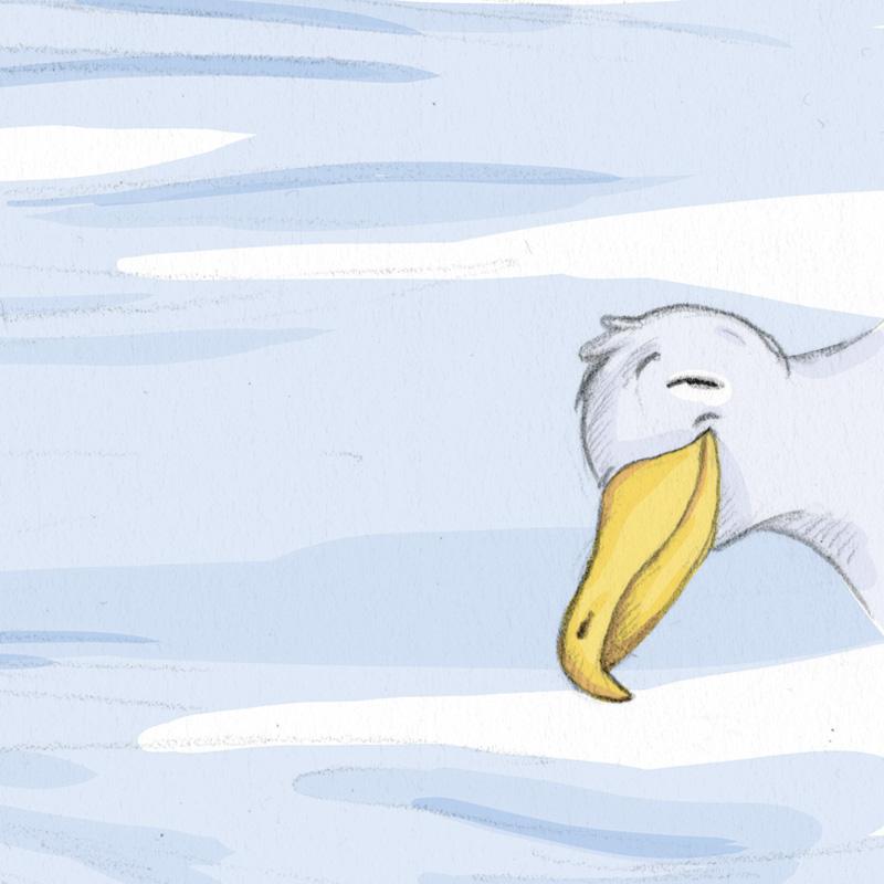 Die Möwe an der Nordsee