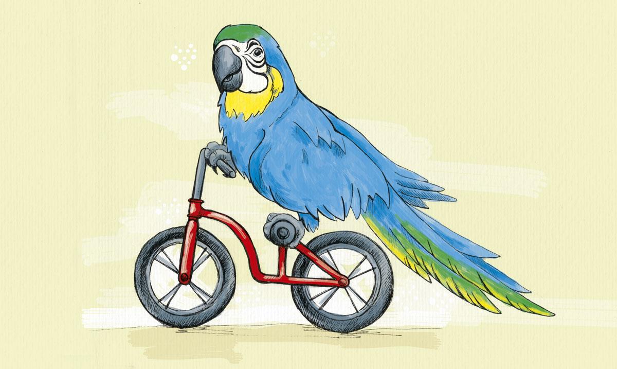 So haben wir ihn gesehen beim Besuch auf der Vogelburg in Hasselbach: ein Gelbbauchara auf einem kleinen Fahrrad.