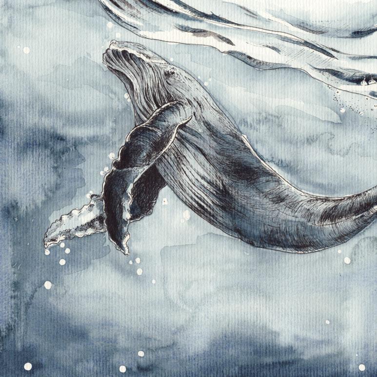 Buckelwale