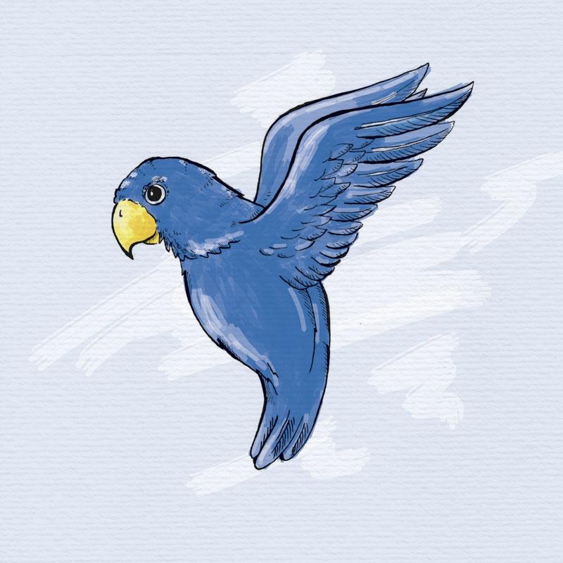 Papageien für Kids