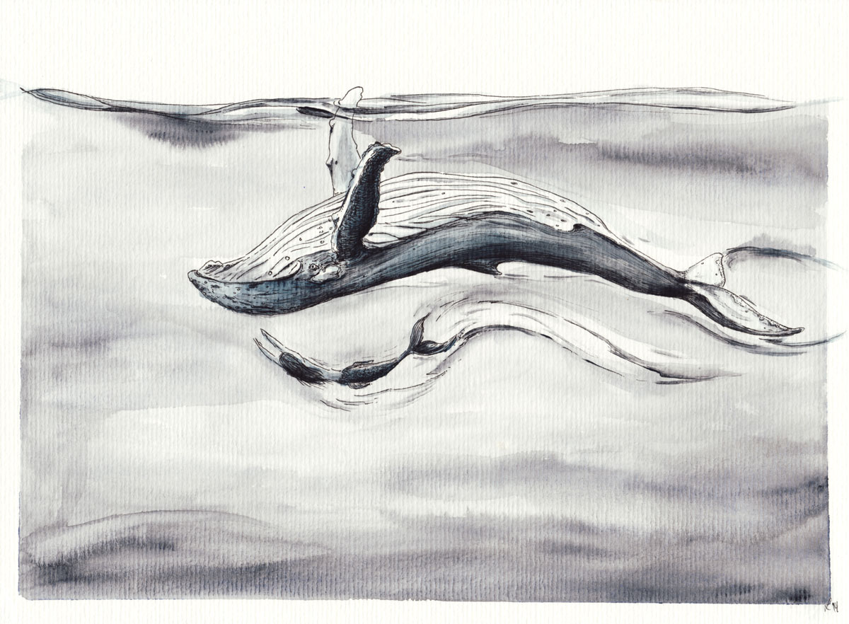 Ob Buckelwale immer nur mit Ihresgleichen schwimmen?