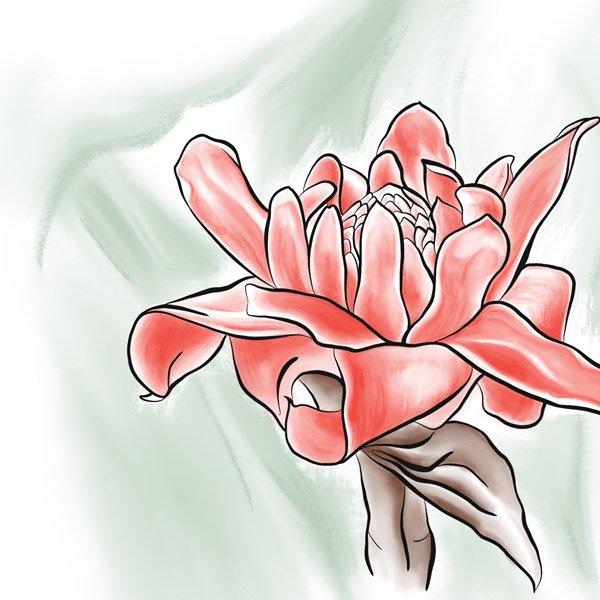 Die Blüte der Ingwerplanze als digitale Illustration.